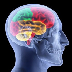 10267363-cerebro-humano-por-rayos-x-aislado-en-negro