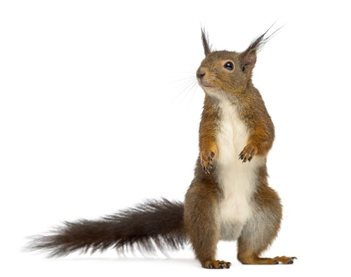 hey-look-a-squirrel-gotcha-stay-on-topic-and-stay-focused
